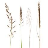 torrt gräs isoalated set white Royaltyfri Bild