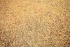 Torrt gräs Arkivfoton