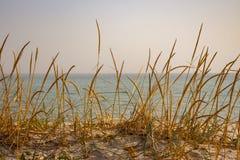 Torrt gult gräs i dyn mot det lugna havet Sjösidabakgrund Högväxt vass på sandstranden Seascape på solnedgång royaltyfri bild