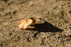 Torrt höstblad ont jordningen royaltyfri foto
