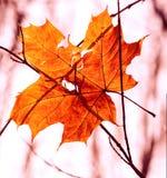 Torrt höstblad som klibbas i skog Royaltyfria Foton