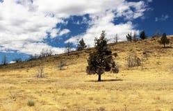 torrt land för träd royaltyfri bild