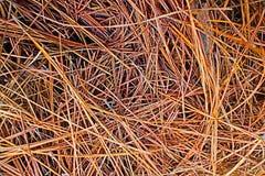 Torrt sörjer sidor sörjer in skogen arkivfoto