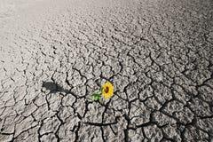 Torrt smutsa och den växande växten Royaltyfri Fotografi