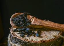 Torrt svart te på träbakgrund royaltyfri foto