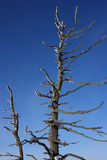 torrt trä Arkivfoton