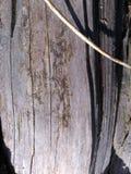 Torrt trä 2 Arkivfoto