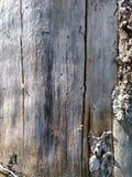 torrt trä Arkivfoto