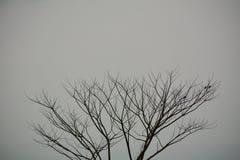 torrt trä Fotografering för Bildbyråer