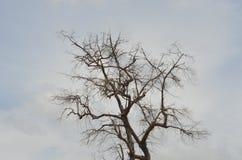 Torrt träd. Arkivfoto