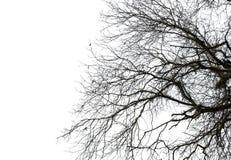 Torrt träd Arkivfoton