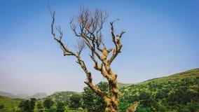 Torrt träd bredvid att förbluffa landskap royaltyfri foto