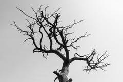 Torrt träd för abstrakt begrepp Fotografering för Bildbyråer