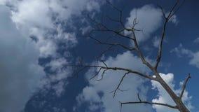 Torrt träd för dött trä med blå himmel och moln på en solig dag stock video