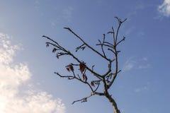 Torrt träd för nakenstudie Fotografering för Bildbyråer