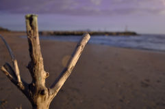 Torrt träd, filial Fotografering för Bildbyråer