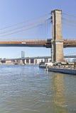 Torrt träd framme av den Brooklyn bron på New York Arkivbilder