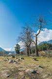 Torrt träd i pahalgam Arkivbild