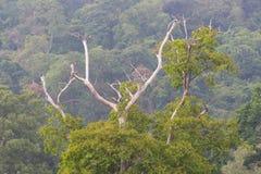 Torrt träd mot berget med vintergröna trän royaltyfri fotografi