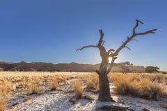 Torrt träd och förstenade dyn Arkivfoton