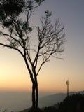Torrt träd på berget Royaltyfria Foton