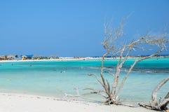 Torrt träd på kusten Royaltyfri Fotografi