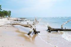 Torrt träd som är stupat på stranden med sand omkring i bakgrunden royaltyfri fotografi