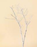 Torrt träd som målas med vit målarfärg på beige bakgrund Royaltyfri Foto