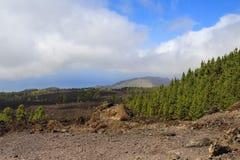 Torrt väder för Forest Mountains Volcano Teide Landscape sommar royaltyfri fotografi