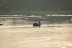 Torsa flod royaltyfri foto