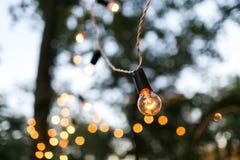 Torse de lampe à filament en parc de soirée Image stock