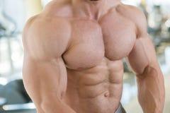 Torse et bras musculaires Photo stock