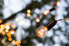 Torse of filament lamp in evening park Royalty Free Stock Images