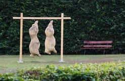 Torsi dei maiali sul parco Immagini Stock Libere da Diritti