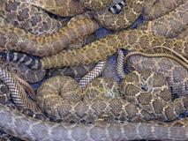 Torsion serpentine photographie stock