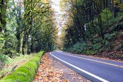 Torsione della strada di scomparsa nella foresta selvaggia di autunno Fotografie Stock Libere da Diritti