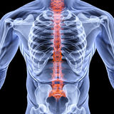 Torso. Men under X-rays. backbone is highlighted in red. isolated on black Stock Photo