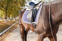 Torso de un caballo marrón con una silla de montar fija outdoors Imágenes de archivo libres de regalías