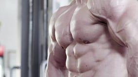 Torso eines starken muskulösen weißen männlichen Bodybuilders stock footage