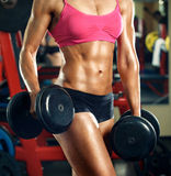 Torso of fitness girl with dumbbells in the gym Royalty Free Stock Images