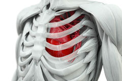Torso with heart. In red and glas rips Royalty Free Stock Photo