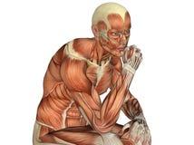 Torso masculino que muestra los músculos ilustración del vector