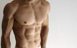 Torso muscolare immagine stock
