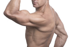 Torso of muscular man posing on white background Stock Images