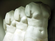 Torso05.  royalty free stock image