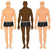 Torsos masculinos Fotografia de Stock Royalty Free