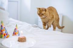 Torta del alimento para animales para el cumpleaños del gato imagen de archivo