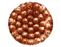 Torta del Tiramisu Imagenes de archivo