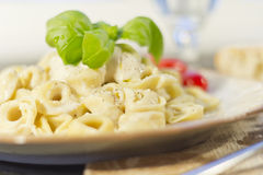Tortellini with Alfredo Sauce Royalty Free Stock Photo