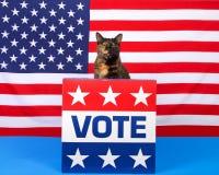 Tortie在指挥台的虎斑猫有表决标志谈话的 库存照片